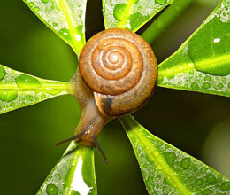 tiande-snail-secret-unikalnaja-linija_15-09-14_01